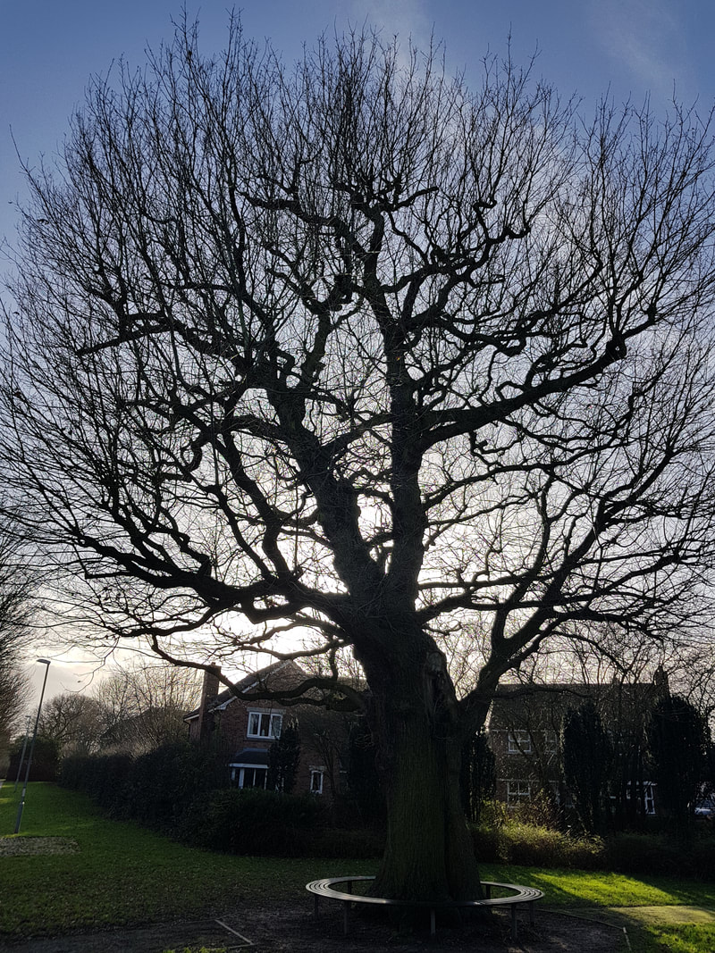tree-surgeon-Macclesfield