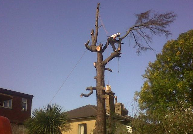 tree-surgeon-Macclesfield-1