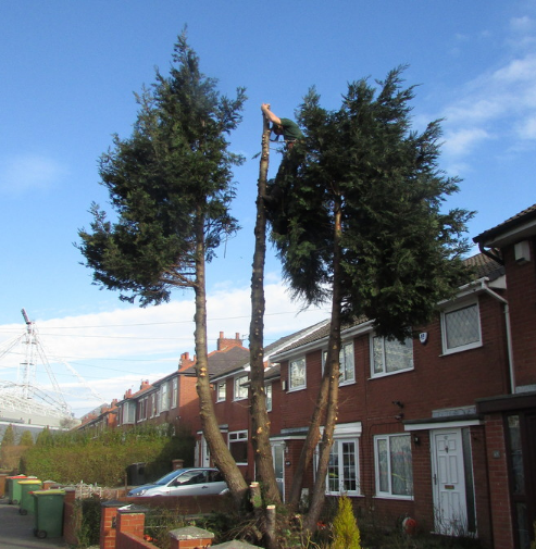 tree-surgeon-Macclesfield-2