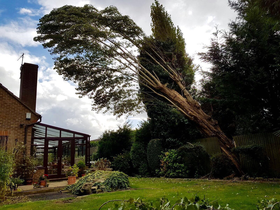tree-surgeon-Macclesfield-4