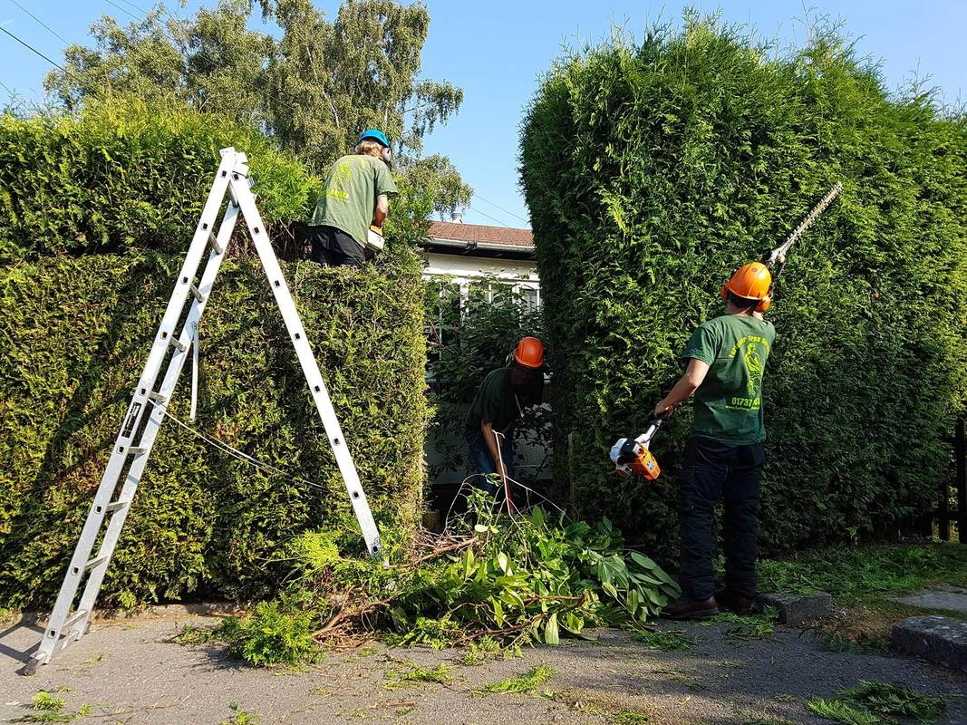 tree-removal-Macclesfield