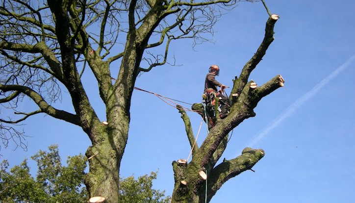 Macclesfield-tree-surgeon