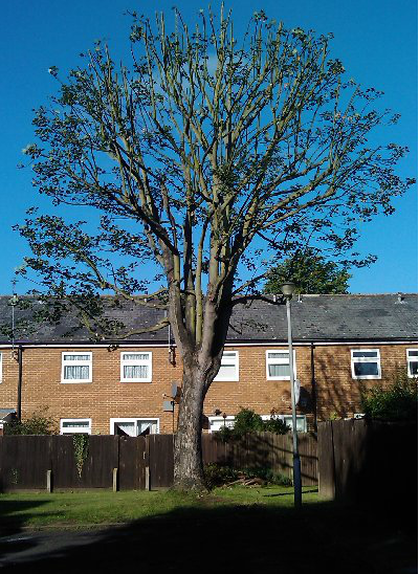 tree-surgeon-Macclesfield-3
