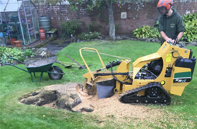 Macclesfield-tree-stump-removals